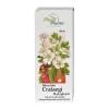 Intractum Crataegi, пероральная жидкость, 100 мл